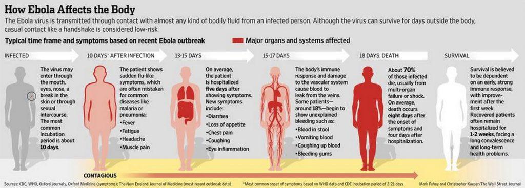 Cómo evoluciona el Ebola