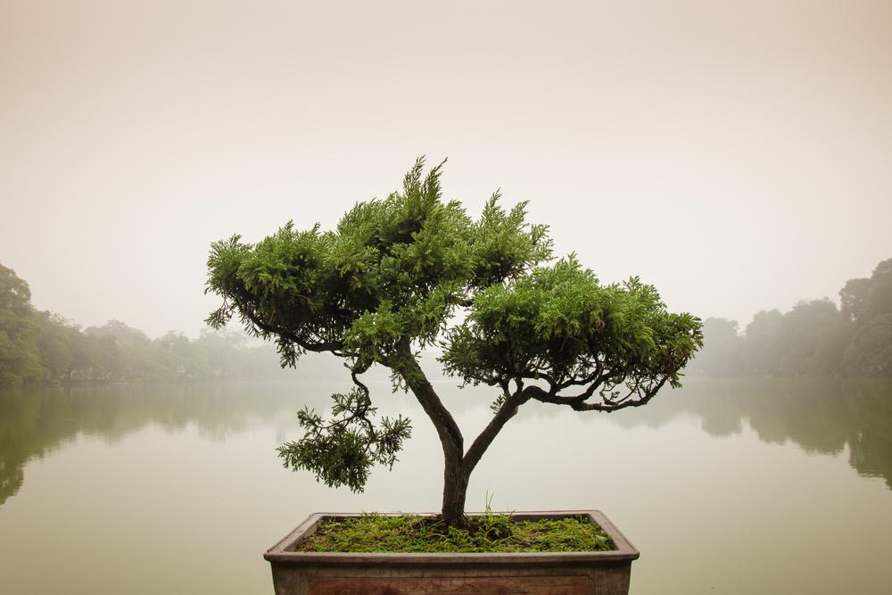Consigue elevar tus finanzas a un estado Zen